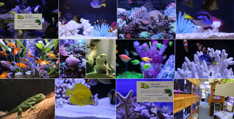 Photos from Aquatic Environments